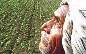 Washim District should be declared drought-affected: NCP's demand | वाशिम जिल्हा दुष्काळग्रस्त घोषित करावा :राष्ट्रवादी काँग्रेसची मागणी