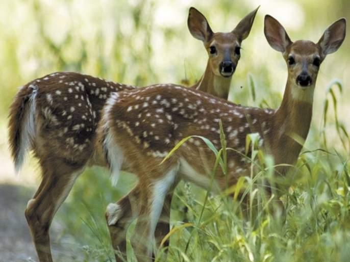 60 percent reduction in wildlife; Life survival threatens   वन्यजीवांच्या संख्येत ६० टक्के घट; सजीवसृष्टीचे अस्तित्व धोक्यात