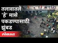 ट्रकला अपघात, लोकांनी साधली संधी | People Swarm After Fish Truck Accident | Solapur | Maharashtra