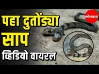 पाहा दुतोंड्या साप, व्हिडीओ व्हायरल
