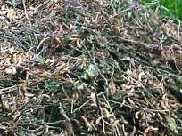 लोकमत बांधावर :सोयाबीनला कोंब पाहून महिला शेतकरी बेशुद्ध
