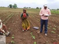 लोकमत इम्पॅक्ट ! 'तो' व्हिडिओ पाहून आजी-आजोंबाच्या शेतावर पोहोचले कृषी अधिकारी - Marathi News | Lokmat Impact ... Agriculture officials reach 'farms doing 'double sowing' of solapur old ager farmer | Latest mumbai News at Lokmat.com