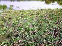 नुकसान भरपाईवर शेतकऱ्यांमध्ये नाराजी