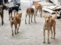 तीन महिन्यात २८०० जणांना कुत्र्यांचा चावा