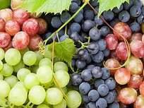 द्राक्ष निर्यातीला लॉक डाऊनचा फटका - Marathi News   Lock down blow to grape exports   Latest nashik News at Lokmat.com