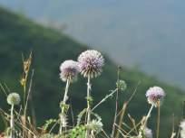 मुंबई, इटलीतील संशोधकांना आढळली दुर्मिळ वनस्पती - Marathi News | Researchers in Mumbai, Italy found a rare plant | Latest mumbai News at Lokmat.com