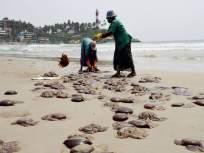 धोका वाढला! गोव्याच्या समुद्र किनाऱ्यावर घातक जेलीफिशचा कहर; २ दिवसात ९० लोक झाले शिकार - Marathi News | Travel Tips : Jellyfish attack on goa seaside 90 people injured | Latest jarahatke News at Lokmat.com