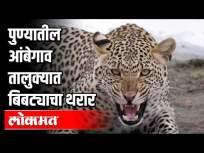 पुण्यातील आंबेगाव तालुक्यात बिबट्याचा थरार! | Leopard trembles in Pune's Ambegaon taluka! | - Marathi News | Leopard trembles in Pune's Ambegaon taluka! | Leopard trembles in Pune's Ambegaon taluka! | | Latest pune Videos at Lokmat.com