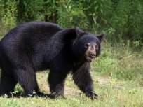 अस्वलाच्या हल्ल्यातयुवा शेतकऱ्याचे दोन्ही डोळे निकामी
