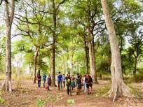 नागपूरच्या भरतवनातील झाडे कायम राहणार :हायकोर्टात माहिती