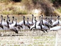 पाणथळ जागा, स्थलांतरित पक्षी आणि त्याचा अभ्यास