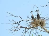 महापुराने पक्ष्यांचे स्थलांतर विस्कळीत