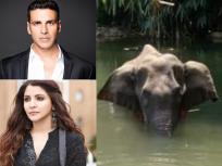 Kerala Elephant Death: घृणास्पद घटना, अमानुषपणे केलेल्या गर्भवती हत्तीणीच्या हत्येवर भडकले बॉलिवूडकर  - Marathi News | Kerala Elephant Death: Hateful incident, inhumane killing of pregnant elephant sparks outrage in Bollywood | Latest bollywood News at Lokmat.com