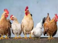 'ॲपोकॅलिप्टीक' नावाचा कोणताही व्हायरस अस्तित्वात नाही, पशुसंवर्धन विभागाचं स्पष्टीकरण - Marathi News | No Apocalyptic virus exists, explains Animal Husbandry, government clarify | Latest mumbai News at Lokmat.com