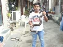 कांदिवली येथे चारकोपच्या रहिवाशी परिसरात आढळला दुर्मिळ प्रजातीचा 'दुतोंड्या' साप - Marathi News | Rare species of Red sand boa snake found in Charkop resident area at Kandivali | Latest mumbai News at Lokmat.com