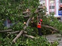 झाडे लावली तरच कापण्याची परवानगी;उच्च न्यायालयाने एमएमआरडीएला घातली अट - Marathi News | Permission to cut only if trees are planted; The High Court imposed the condition on MMRDA | Latest mumbai News at Lokmat.com