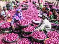 राज्यात कांद्याची दरवाढ सुरूच; मुंबईत ८५ तर जुन्नर आळेफाटा बाजार समितीमध्ये १२१ रुपये किलो - Marathi News | Onion prices continue to rise in the state; 85 in Mumbai and Rs. 121 in Junnar Alleppey Market Committee | Latest maharashtra News at Lokmat.com