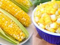 उन्हाळ्यातही खा मका; फायदे ऐकून व्हाल चकित - Marathi News | Summer alert: Eat corn in summer; You'll be amazed with unlimited benefits | Latest food News at Lokmat.com