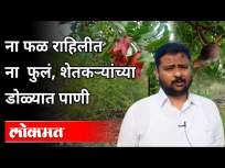 फळ राहिलीत ना फुलं, शेतकऱ्यांच्या डोळ्यात पाणी | Farmers Tears In The Eyes | Maharashtra News - Marathi News | No fruit, no flowers, no tears in the eyes of farmers Farmers Tears In The Eyes | Maharashtra News | Latest sangli Videos at Lokmat.com