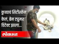 सिटीस्कॅनमुळे कुत्र्याला ब्रेनट्युमर डिटेक्ट झाला| Stray dog undergoes CTscan, brain tumour detected - Marathi News | CT scan detects brain tumor in dog | Stray dog undergoes CTscan, brain tumor detected | Latest national Videos at Lokmat.com