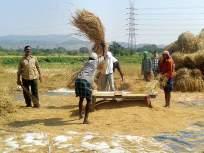 २८ हजार शेतकऱ्यांना कर्जमाफी; दोन्ही जिल्ह्यातील शेतकऱ्यांचा समावेश