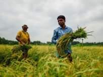 शेतकऱ्यांना पैसे मिळाले नसल्याचा आरोप