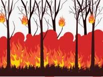 कागदोपत्री लागवडीमुळेच पेटली वनीकरणाची हजारो झाडे!