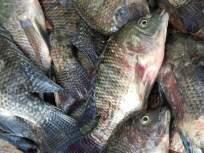 लॉकडाऊनमुळे नागपुरात ३ टन मासे खराब होण्याच्या मार्गावर - Marathi News | Lockdown on the way to damage 3 tonnes of fish in Nagpur | Latest nagpur News at Lokmat.com