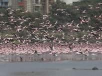 धक्कादायक! राजस्थानमध्ये हजारो पक्ष्यांचा संशयास्पद मृत्यू