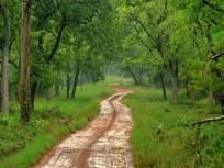 भांबवलीचं जंगल औषधी वनस्पतीचं आगारच !