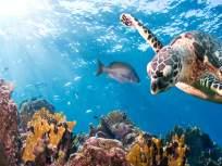 समुद्र सफरीचा आनंद घेतील महाराष्ट्रातील पर्यटक, सिंधूदूर्गात सुरू होणार टुरीस्ट सबमरीन सेवा