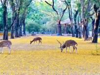 पक्ष्यांसह प्राण्यांचा मुक्त विहार - Marathi News | Mumbai morning with birds sound | Latest mumbai News at Lokmat.com