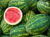 मंडळी कलिंगड खरेदी करताय...कसा निवडाल गोड, रसदार कलिंगड? - Marathi News | How to choose sweet, juicy watermelon? | Latest food News at Lokmat.com