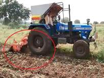 बघा ! हे असंही घडतंय, शेतकऱ्यानं 2 एकर 'कांदा' पिकात फिरवला रोटाव्हेटर