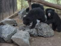 महाराज बागेतील प्राण्यांना खेळण्यासाठी दगडांचा आधार