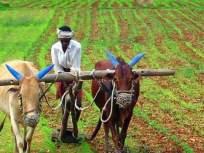 बळीराजा सुखावला; पाऊस पाणी समाधानकारक - Marathi News | Baliraja Sukhavala; Rain water is satisfactory | Latest mumbai News at Lokmat.com