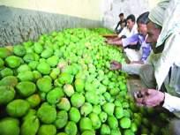 कृषी अधिकारी, आर.टी.ओमार्फत शेतक-यांना आंबा विक्रीसाठी परवाना - Marathi News | License for sale of mangoes to farmers through Agriculture Officer, RTO | Latest mumbai News at Lokmat.com