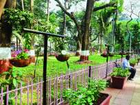 मुंबईच्या बागेत बहरणार झुलत्या कुंड्या; 'पिटोनिया'च्या रोपामुळे सौंदर्यात भर
