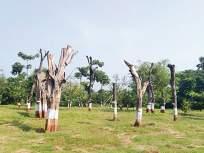 आरेतील पुनर्रोपित झाडांपैकी 60 टक्क्यांहून अधिक झाडे मृतावस्थेत