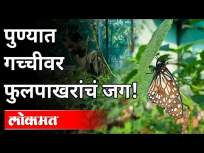 पुण्यात गच्चीवर फुलपाखरांचं जग | A world of Butterflies on the Terrace in Pune | Pune News - Marathi News | A world of butterflies on the terrace in Pune A world of Butterflies on the Terrace in Pune | Pune News | Latest maharashtra Videos at Lokmat.com