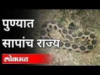 पुण्यात सापांच राज्य - Marathi News | Snake kingdom in Pune | Latest maharashtra Videos at Lokmat.com