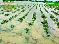 मराठवाड्यात साडेतीन लाख हेक्टरवरील पिकांवर अस्मानी संकट - Marathi News | Crisis on crops on three and a half lakh hectares in Marathwada | Latest maharashtra News at Lokmat.com