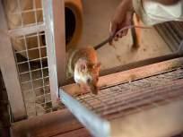 अबब! 5,457 उंदीर मारण्यासाठी रेल्वेकडून दीड कोटी रुपयांचा खर्च