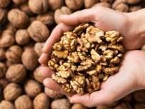 वजन कमी करायचं असेल तर नियमित खा अक्रोड, इतर फायदे वाचूनही व्हाल अवाक् - Marathi News | If you want to lose weight, eat walnuts regularly, you will be surprised to read other benefits | Latest health News at Lokmat.com