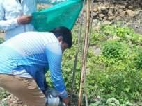 वृक्ष जगविण्यासाठी हंड्याने पाणी;टनका ग्रामस्थांचाउपक्रम