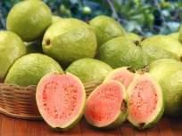 पोटाच्या विकारांसह रक्ताची कमतरता भरून काढण्यासाठी फायदेशीर ठरतो पेरू; तज्ज्ञांनी सांगितले फायदे - Marathi News | Benefits of Eating guava for Stomach Disorders, Anemia, Experts Says | Latest health Photos at Lokmat.com