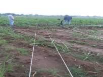 श्रीरामपूर तालुक्याला अवकाळीचा तडाखा; गहू, कांद्याचे नुकसान, वीजपुरवठा पुरवठा खंडित - Marathi News | Shrirampur taluka hit on time; Wheat, onion losses, power supply disrupted | Latest ahmadnagar News at Lokmat.com