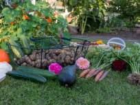 थंडीच्या दिवसात 'या' भाज्या खाणं ठरेल फायदेशीर