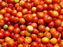 टमाट्याच्या दरामध्ये मोठी वाढ; उत्पादन कमी असल्याने दर पोहोचले ५० रुपयांवर - Marathi News | A large increase in the price of tomatoes; Due to low production, the rate reached Rs | Latest business News at Lokmat.com