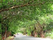 सार्वजनिक खाजगी सहभागातुन ४० लक्ष हेक्टरवर झाडे लावता येतील - Marathi News | Through public-private partnership, trees can be planted on 40 lakh hectares | Latest mumbai News at Lokmat.com